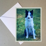 Sitting border collie