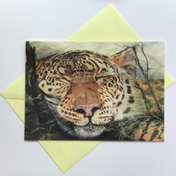 Snoozing leopard card