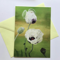 White poppies card