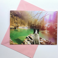 Collie at the lake greeting card
