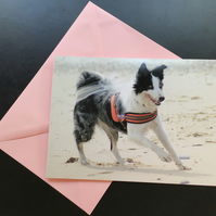 Collie at the beach card