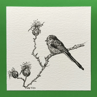 Long tailed tit drawing