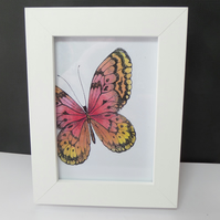 Butterfly Frame 1