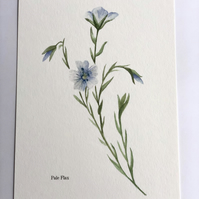 Pale flax a4 watercolour Giclee print