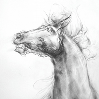A4 Digital Print - 'Harbinger' (detail) Horse Head Drawing