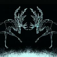 Greeting Card - 'Two Stags' white on black