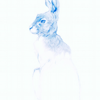 The Blue Hare print A4