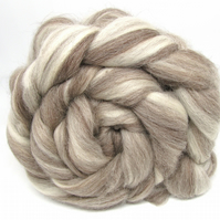 Bluefaced Leicester Humbug Natural Coloured combed wool top Blend 100g 3.5 oz