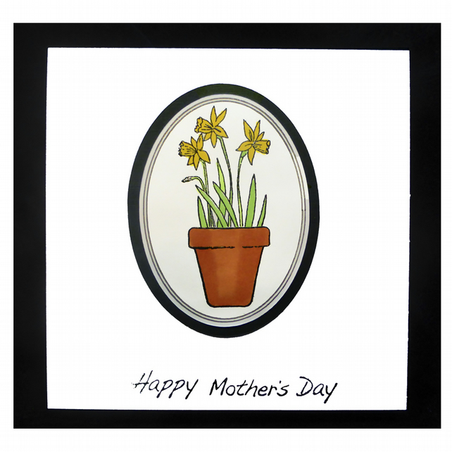 Pot of Daffs for Mum (MD451)