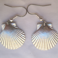 Small scallop shell pewter earrings