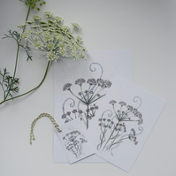 Cow Parsley Notecard Gift Pack