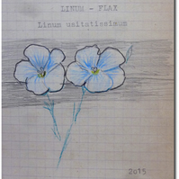 BLUE FLAX - Linum usitatissimum - home grown seeds in hand illustrated envelopes