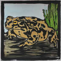 Natterjack Toad lino print, limited edition