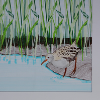 Limited edition and signed Giclee print of 'Water rail' by Ann-Marie Ison.