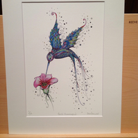 "12 x 15""Stunning purple Hummingbird illustration, mounted ready to frame"