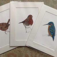 A Trio of British Bird a4, mounted Prints OFFER