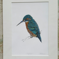 "12 x 15 "" Stunning Kingfisher print mounted, ready to frame print"