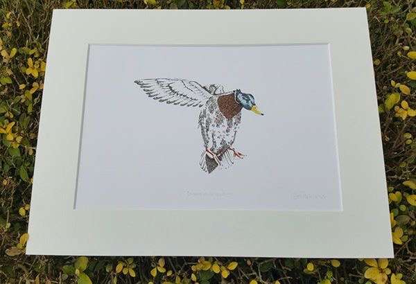 "'Coming in to land' 12 x 15"" mounted print"