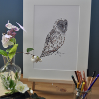 Barn Owl print in colour (12x 15'') mounted ready to frame.