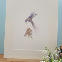 Iridescent Hummingbird a4 mounted print limited12 x 15 inches