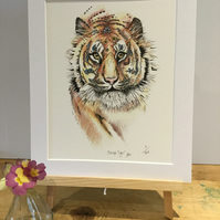 "Bengal Tiger limited edition Art Print 12"" x 10"" pre order"