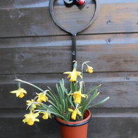 "WROUGHT IRON  ""LADYBIRD"" PLANT POT RING HOLDER"