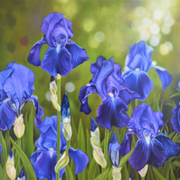 """Glorious Spring"" Digital Print - Purple Bearded Irises Flowers"
