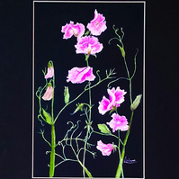Mixed media original artwork - Pink Sweet Peas (VA 015)