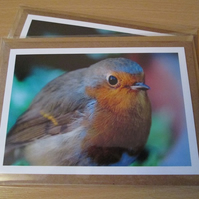 Robin Photo Greetings Card