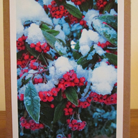 SALE - Berries Photo Greetings Card