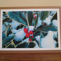 SALE - Holly Photo Greetings Card