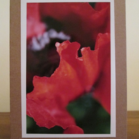 Poppy Photo Greetings Card