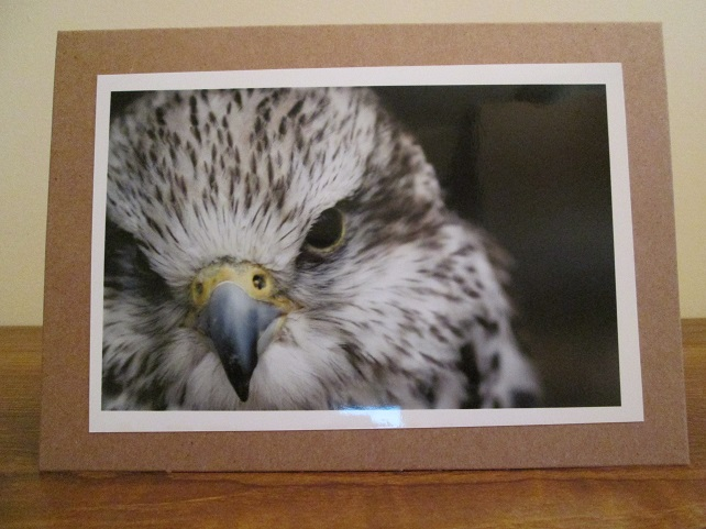 Hawk Photo  Greetings Card