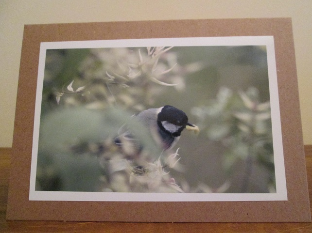 Great Tit Photo Greetings Card