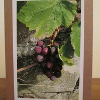 Grapes Photo Greetings Card