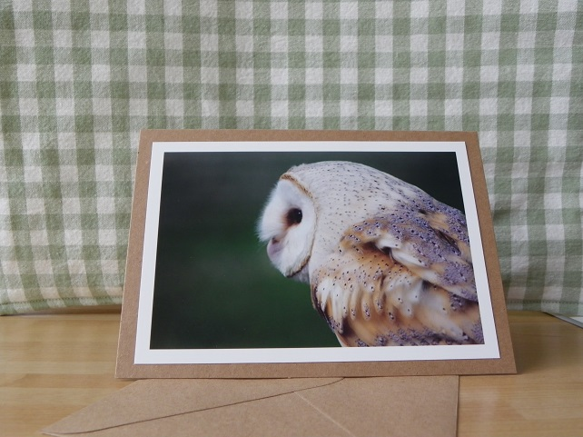 Barn Owl Photo Greetings Card