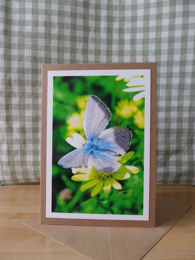 Blue Butterfly Photo Card