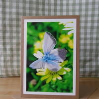 Blue Butterfly Photo Greetings Card