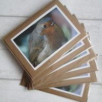 SALE - Robin Photo Cards - Six Pack