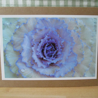 Ornamental Cabbage Greetings Card
