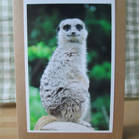 Meerkat Photo Greetings Card