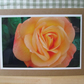 Peach Rose Photo Greetings Card