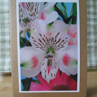 Floral Photographic Greetings Card, Peruvian Lily, Alstroemeria