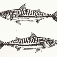 Mackerel - fish - card - blank inside - ideal for fishermen - cards for men