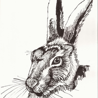 Easter cards - Hare Greetings card - blank inside - card for animal lover!