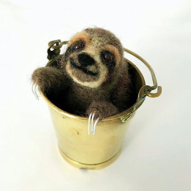 3 Toed Sloth In Bucket