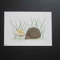 Aceo watercolour painting original, Hedgehog