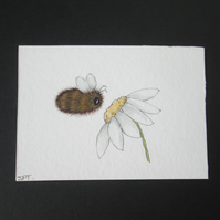 Original aceo watercolour and pen painting, Bee, flower, Daisy, garden