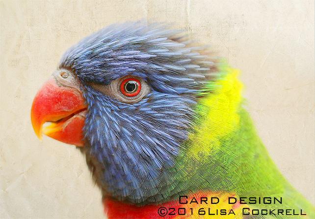Exclusive Rainbow Lorikeet Greetings Card