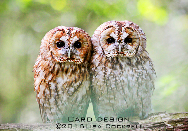 Exclusive Tawny Owls Greetings Card